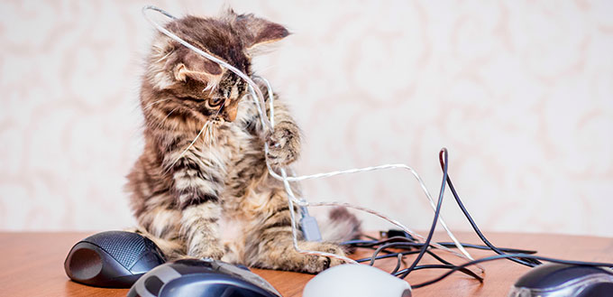 Kitten playing with wires