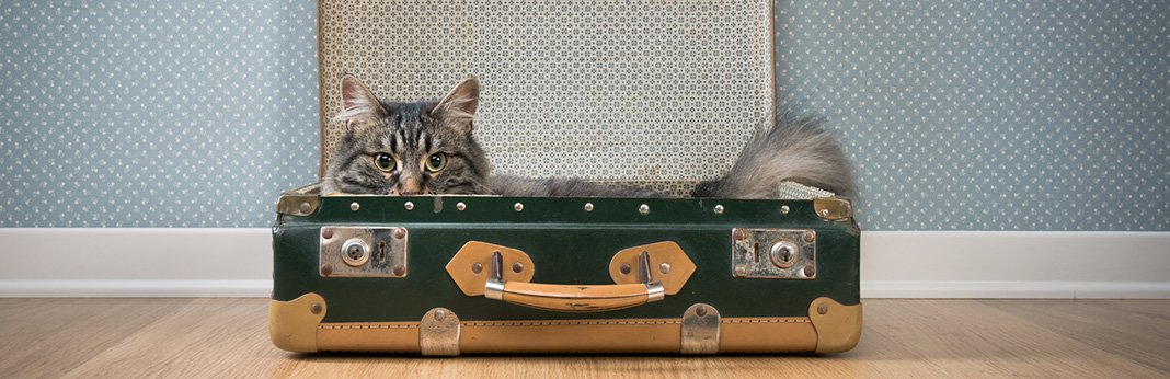 Moving With Cats: Helping Your Cat Adjust to a New Home