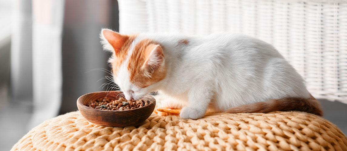 Purina-Pro-Plan-Cat-Food-Review