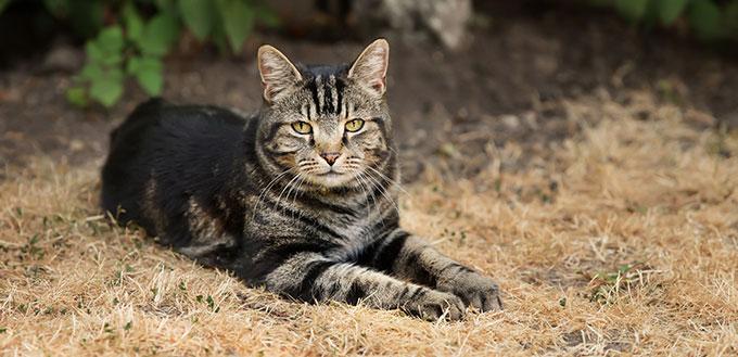 Tabby cat lying on dry grass