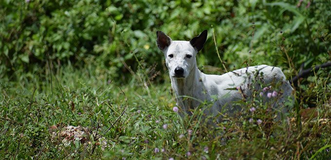 pretty white puppy dog on the lawn forest, homeless wild mixed dalmatian