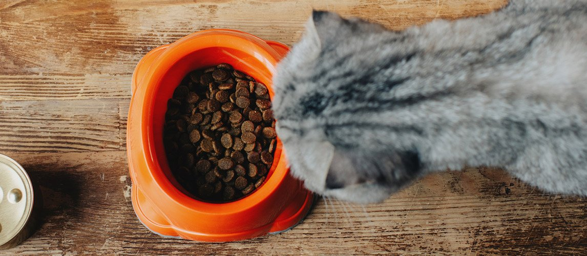 Abound-Cat-Food-Review