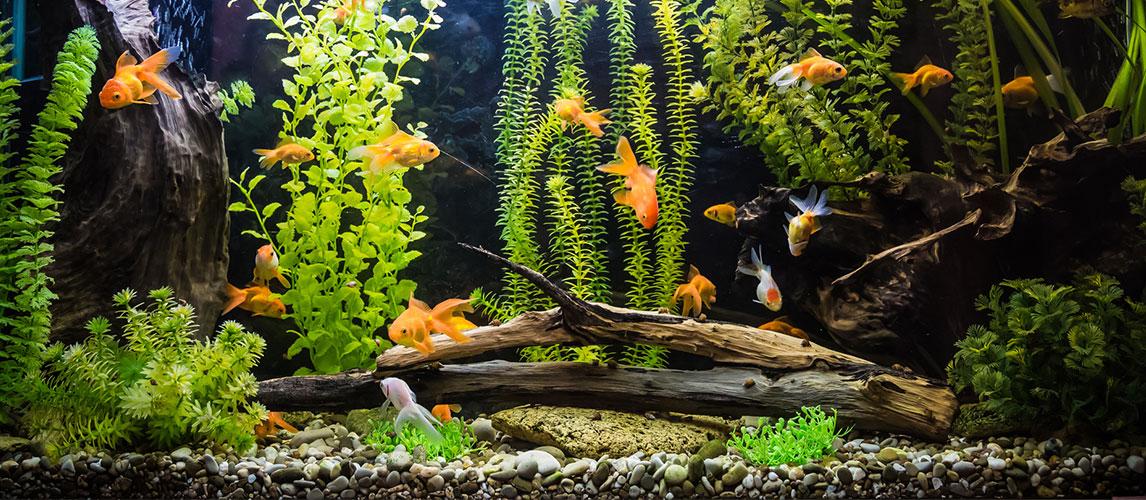 Best-Aquarium-Gravel
