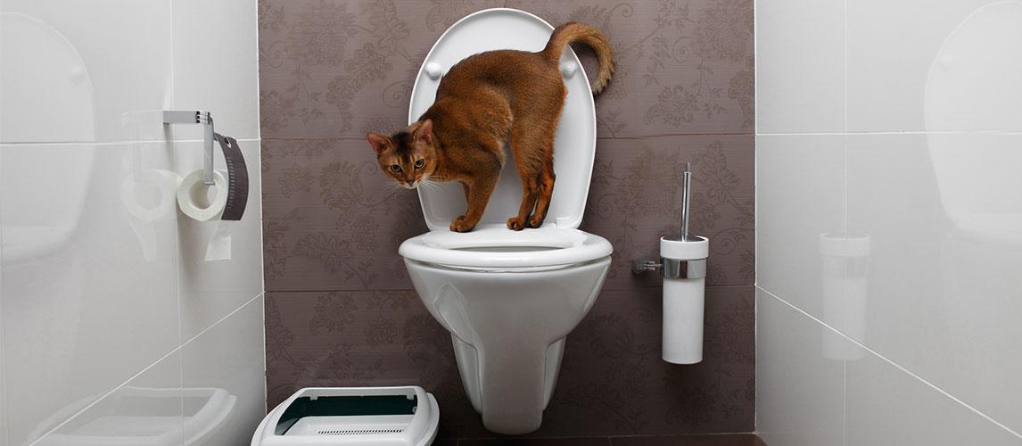Best-Cat-Toilet-Training-Kit