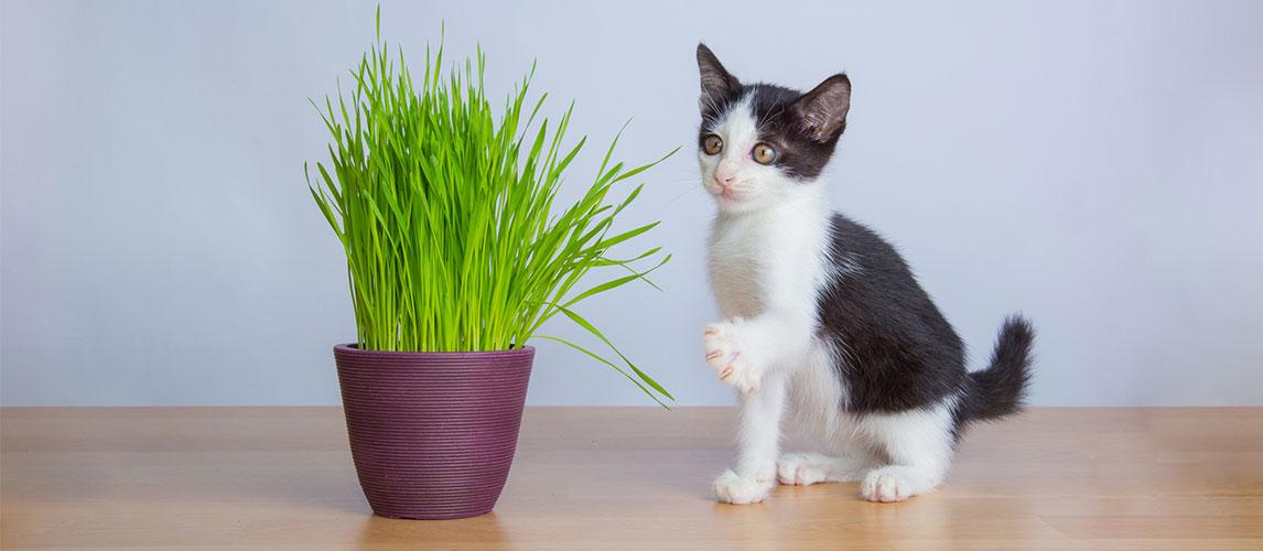Best-Grass-for-Cats