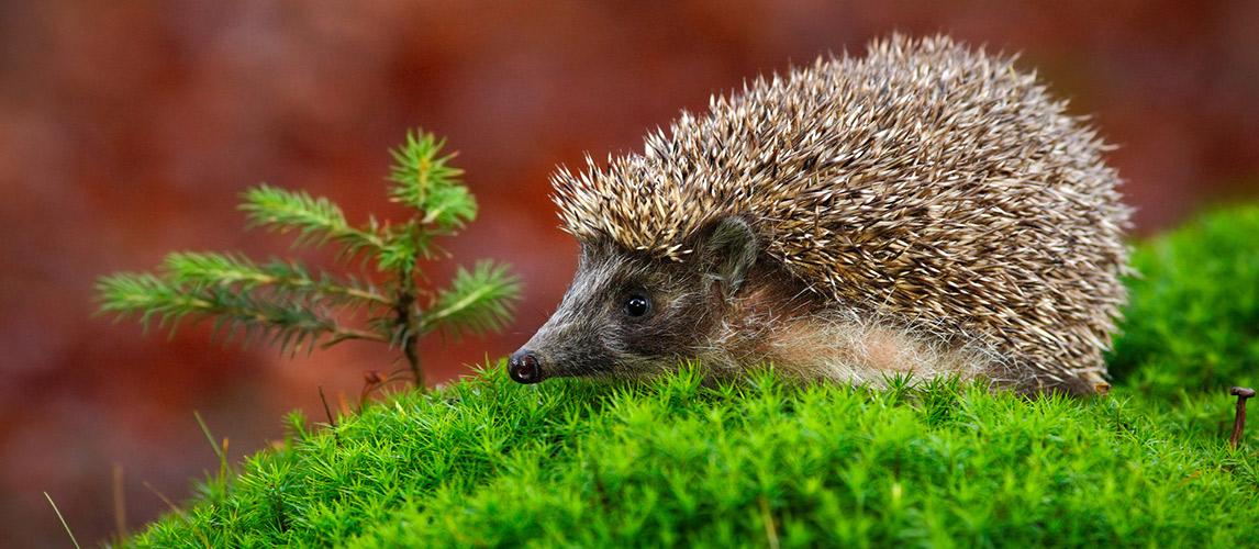 Best-Hedgehog-Cage