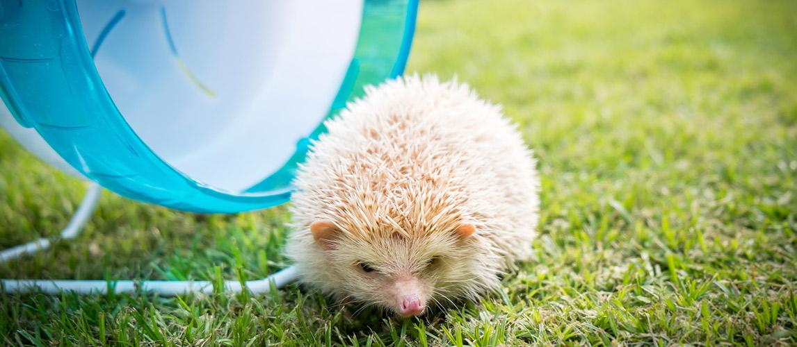 Best-Hedgehog-Wheels