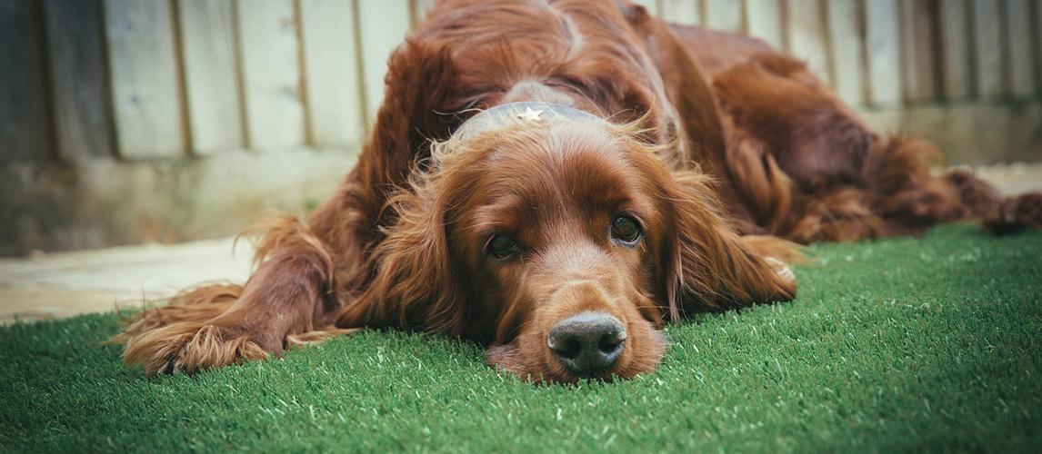 Best-Pet-Safe-Weed-Killer-for-Your-Yard