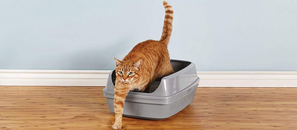 Best-Sifting-Litter-Box