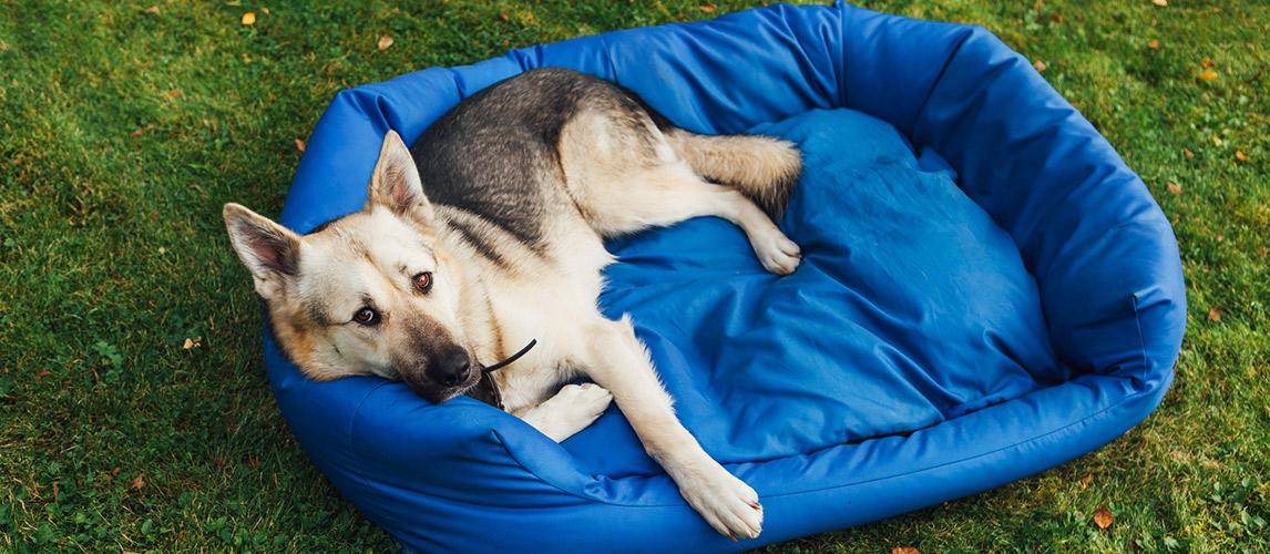 Best-Waterproof-Dog-Beds