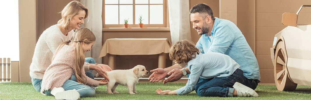 How to Convince Your Parents to Get a Dog: Tips for a Successful Conversation