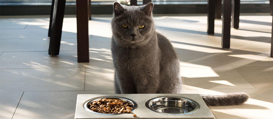 Iams-Cat-Food-Review