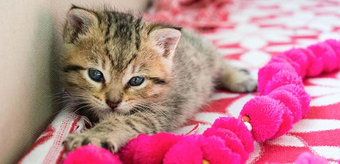Kitten lying on the blanket