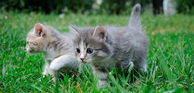 Little kittens playing