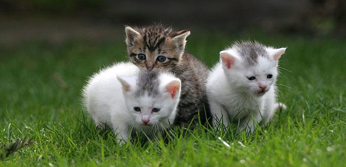 Three cat on the grass