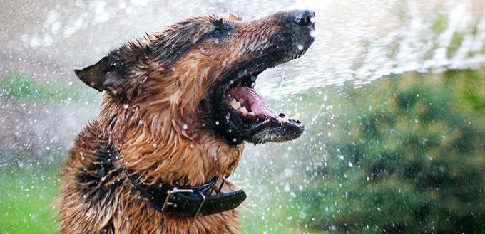 Washing the dog
