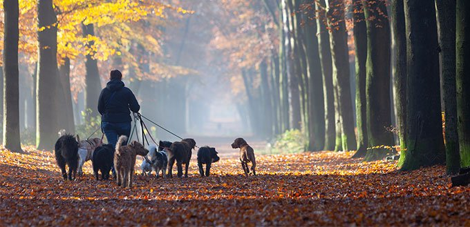 Woman wlaking dogs in the forest