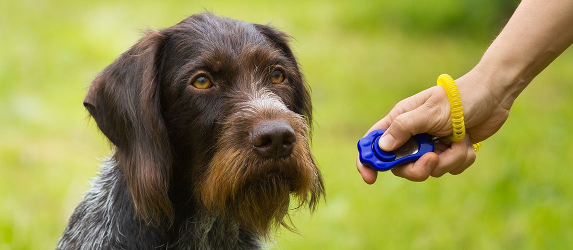 Best-Dog-Training-Clickers