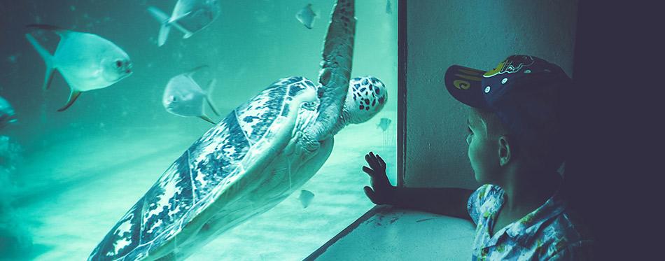 Boy watching a turtle in an aquarium