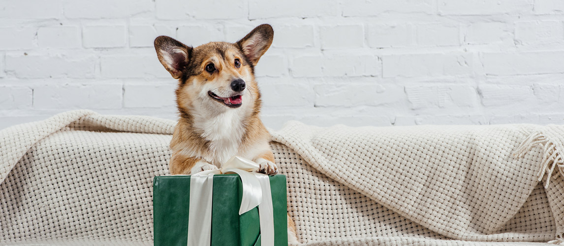 Dog-Subscription-Boxes1