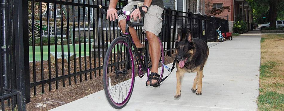 Dog on a bike leash