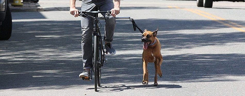 Man on a bike walking a dog
