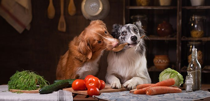 two dogs together in the kitchen are preparing food.