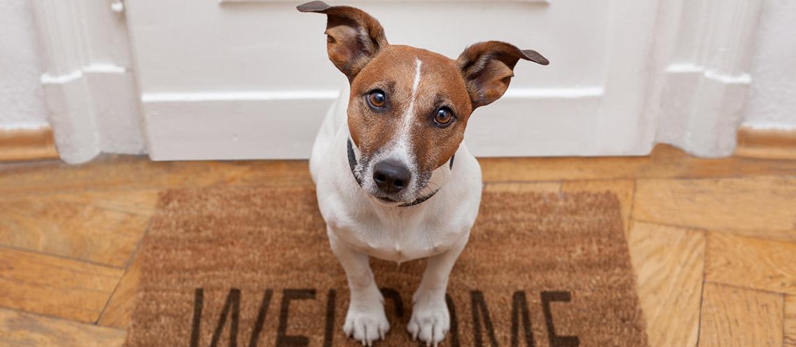 10 Best Pet Adoption Websites My Pet Needs That