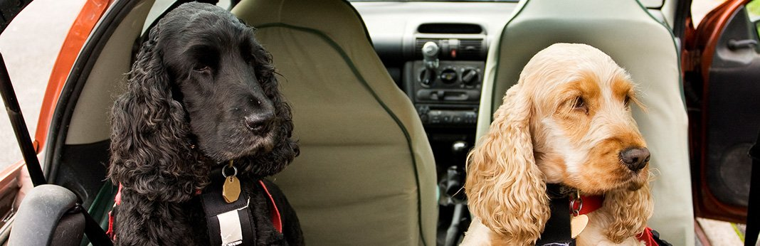 8 Ways To Get Dog Hair Out Of Your Car