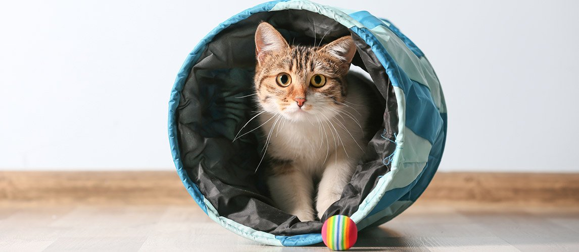 Best-Cat-Tunnels