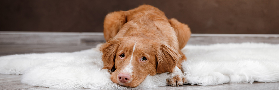 Dog Won't Go Outside: 5 Reasons Your Dog Refuses to Walk