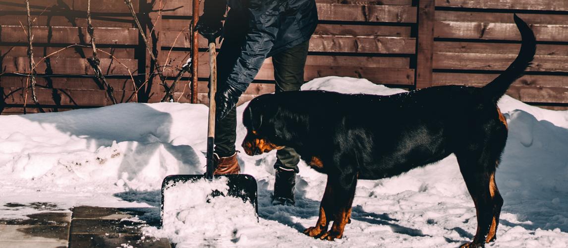 best-pet-safe-ice-melt