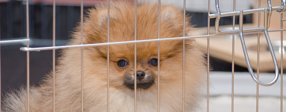 Dog in a crate