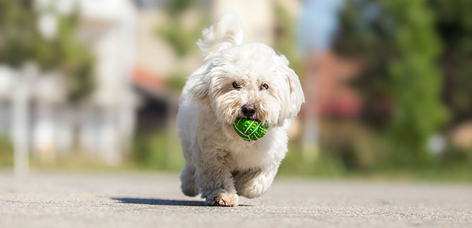 Dog with a rubber ball
