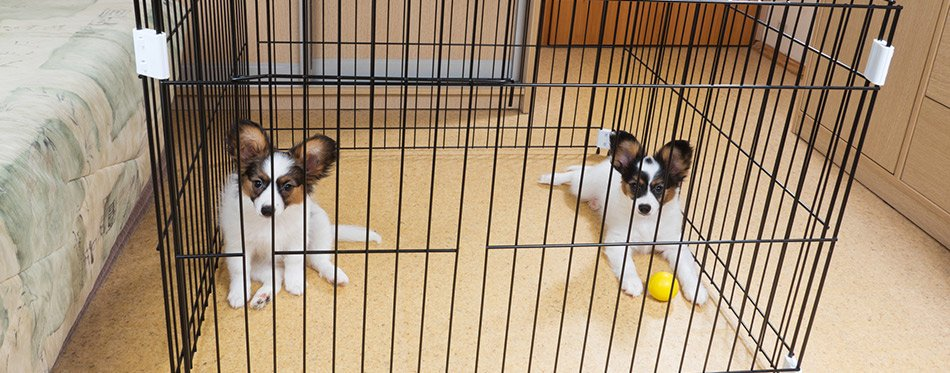 Puppies playing in a dog crate