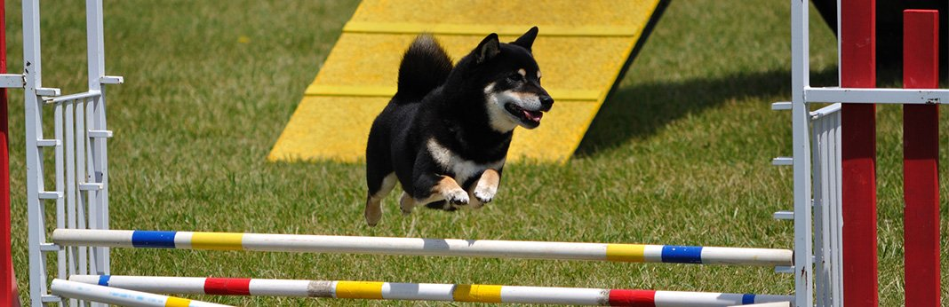 5 Dog Sports You and Your Pooch Need to Try This Summer