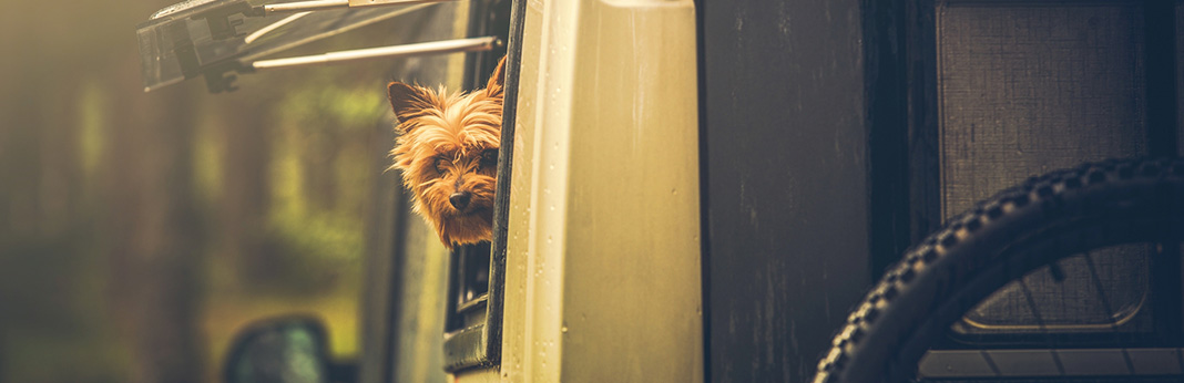 A-Beginner's-Guide-to-RVing-with-Dogs