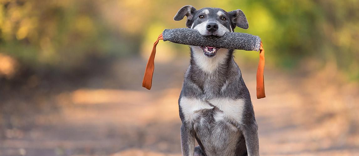 Best-Dog-Training-Dummies