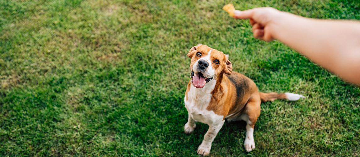 Best-Gourmet-Dog-Treats