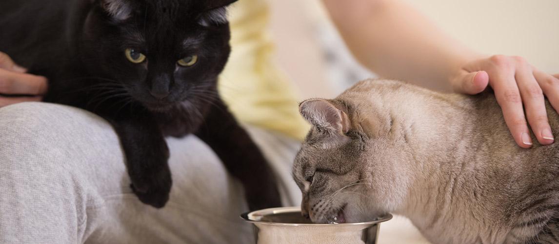 Best-Low-Carb-Cat-Food