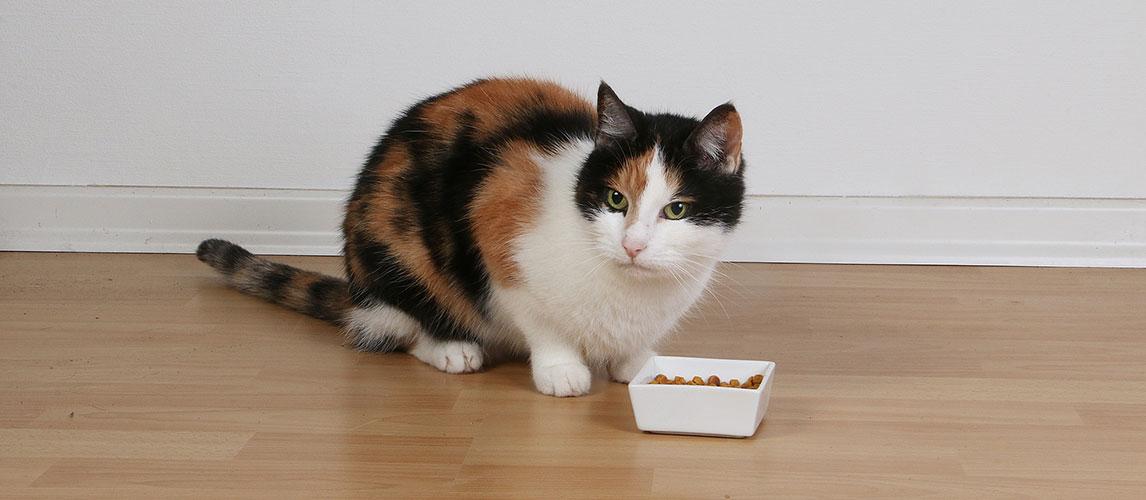 Best-Moist-Semi-Moist-Cat-Food