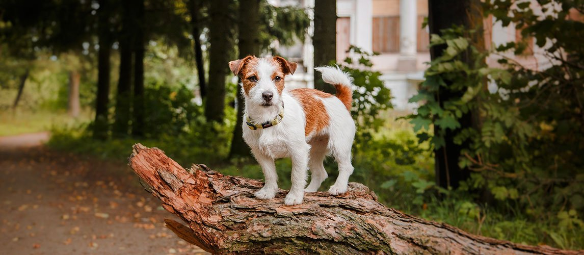 Best-Mosquito-Repellent-for-Dogs