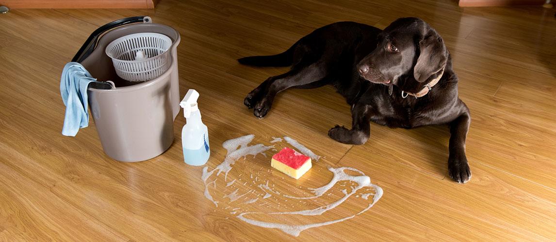 Best-Pet-Safe-Floor-Cleaners