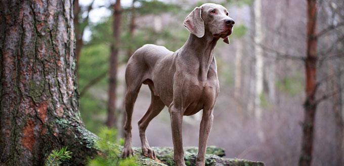 Dog and dry tree