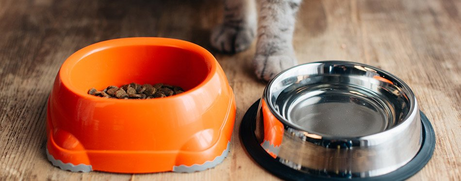 Grey cat near bowls with water and pet food on floor