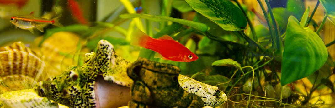 How to Safely Acclimate New Fish to Your Aquarium