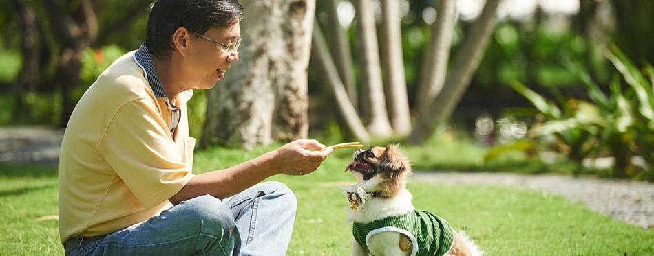 Mature man training dog