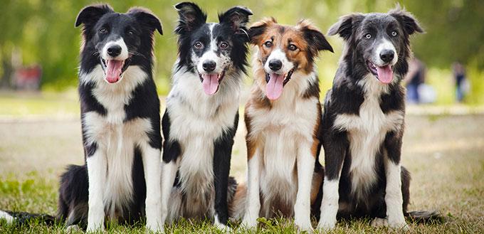 Groupe de chiens heureux assis sur l'herbe