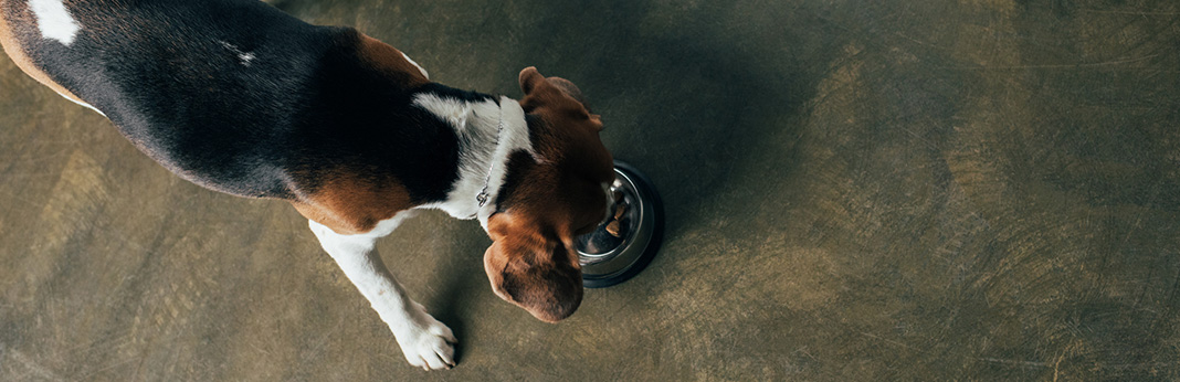 My Dog Eats Too Fast: X Ways To Slow Them Down