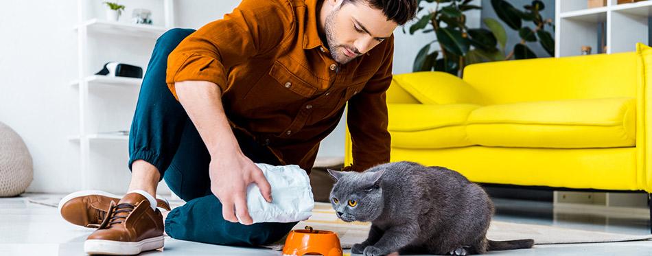 Young man feeding grey british shorthair cat in living room